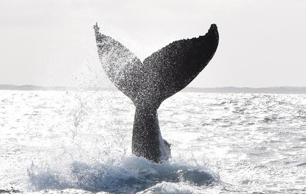 Whale Watching Cruise Margaret River