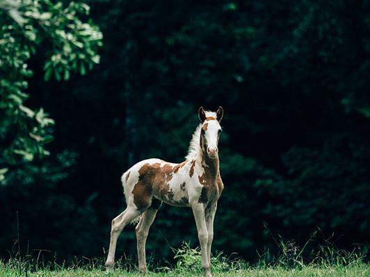 tocori-horses