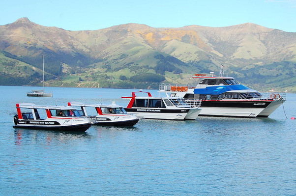 boat akaroa nature cruise