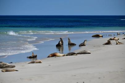 1 Day Kangaroo Island Wildlife Discovery from Adelaide