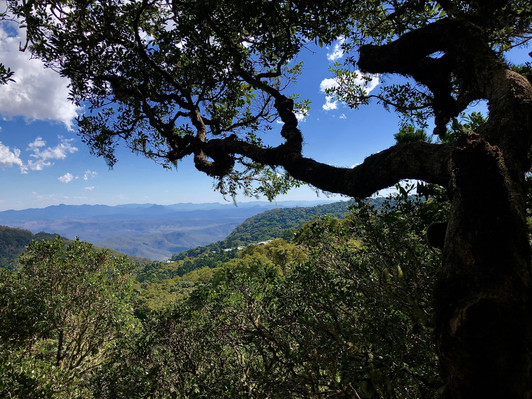Lamington National Park Walk Deals