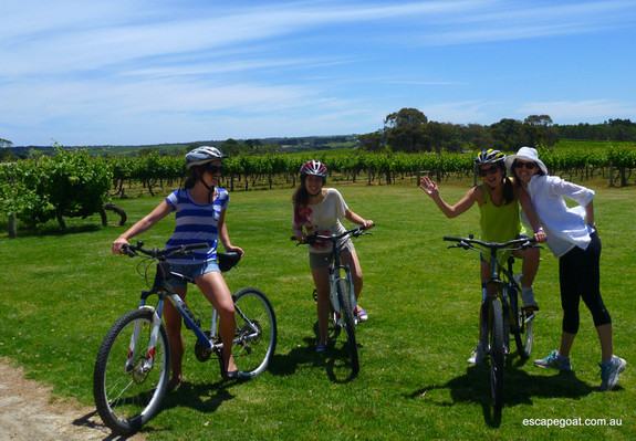 Hills, Vines and Wines by mountain bike wineries tour