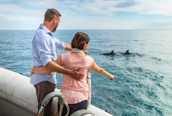 Dolphin Tour Kangaroo Island
