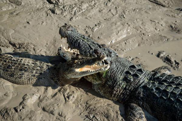 Adelaide River Crocodiles Tourism NT-Shaana McNaught 125871-56.jpg