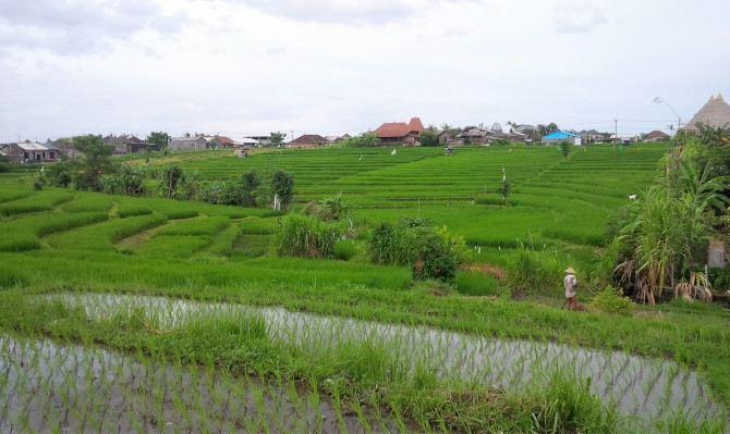 visit rice field bali