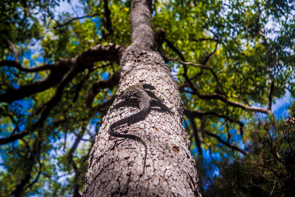 K'gari (Fraser Island) 3-Day 2-Night Glamping Nature Escape