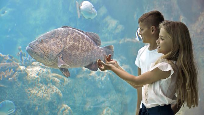 Daydream Island Underwater Observatory Kids