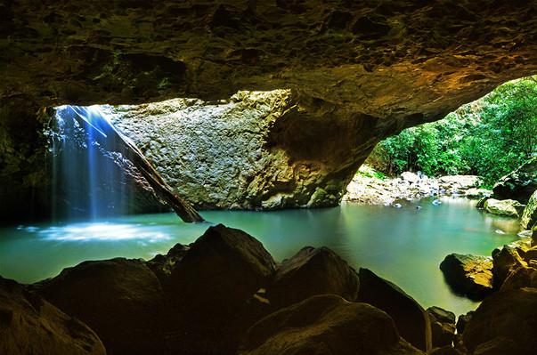 Springbrook & Tamborine Rainforest Tour Deal