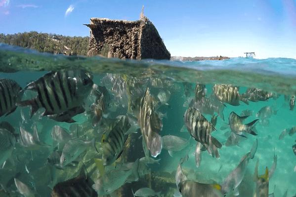 Moreton Island Day Cruise & Eco Marine Safari