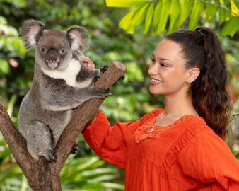 Kuranda Koala Gardens Park Entry