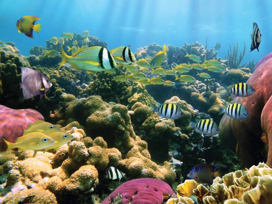 Kona Snorkel Tour