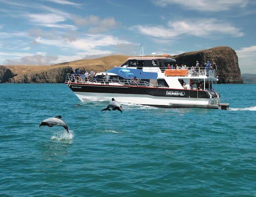 best akaroa dolphin cruises
