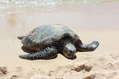 Island Circle Turtle Tour