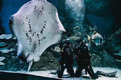 Cairns Aquarium Shark Dive Deals